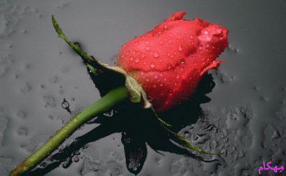 مهکام-ازدواج-موقت-زن-و-شوهر