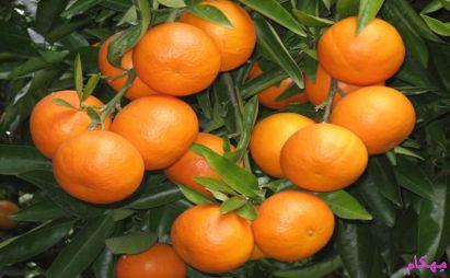 نارنگی و درمان با آن