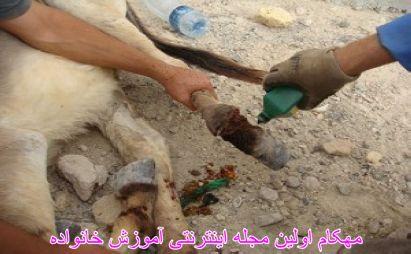 داستان فراموش نشدنی الاغهای جزیره هنگام (6)-www.mehcom.com