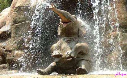 مهکام حیوانات معماهای جالب به اضافه معمای فیل ها