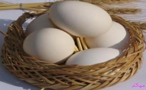 مهکام-تغذیه سالم-باورهای غلط درباره تخم مرغ را اصلاح کنیم