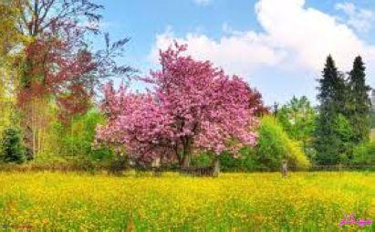 قصیده بهاریه اثری زیبا از شاعر معاصر داوود احمدی (باقی)