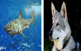 استعاره سگ خانگی و کوسه را بخوانید-درمان پذیرش و تعهد (اکت ACT)