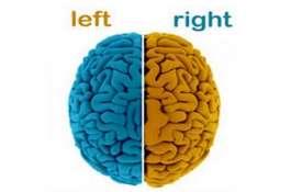 برتری یک نیمکره مغز در انسان اشتباه بود!