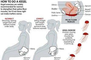 عضله پوبوکوکسیژئوس کجاست ؟
